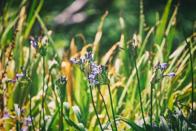 Purpere bloemen en gebladerteachtergrond