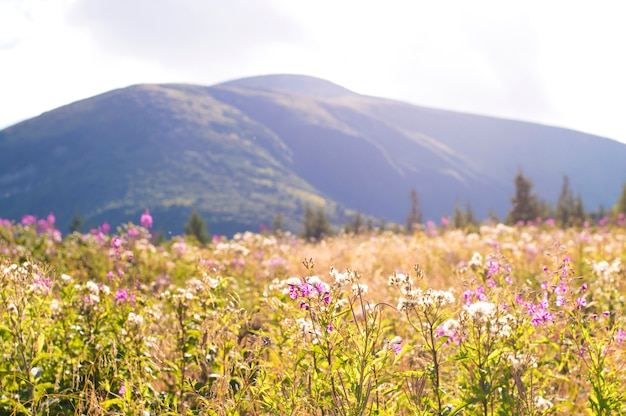 Purpere bloemen op een bergenachtergrond