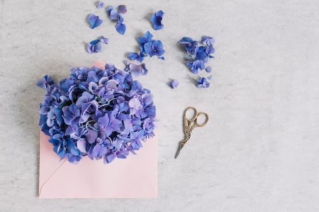 Purpere hydrangea hortensiabloem op roze envelop met schaar tegen ruwe achtergrond