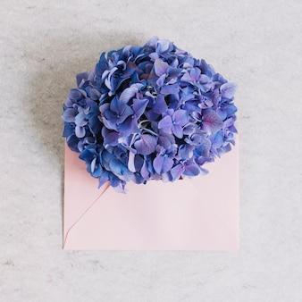 Purpere hydrangea hortensiabloem op roze envelop tegen ruwe achtergrond