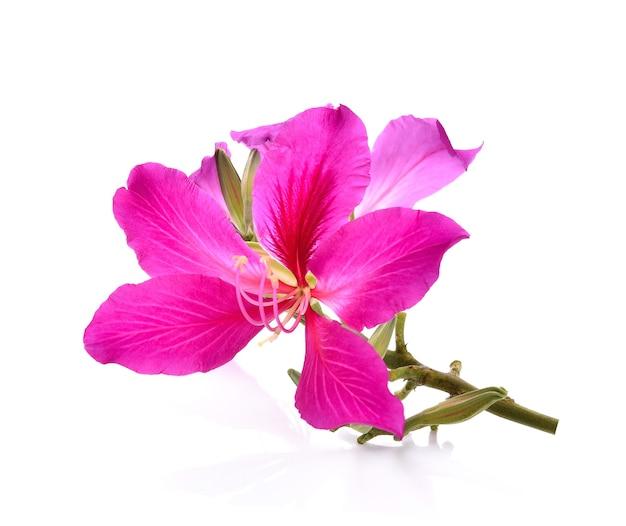 Purpurea paarse bloemen met wit