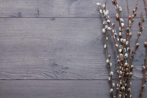 Pussy wilgentakken op grijze houten achtergrond. wilgentakjes in de vroege lente. plat leggen, bovenaanzicht met lege ruimte.