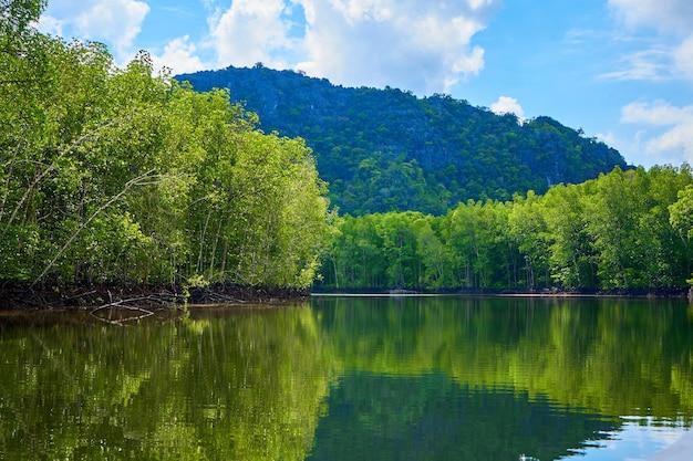 Puur natuurlandschap rivier tussen mangrovebossen.