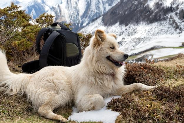Pyreneese sennenhond