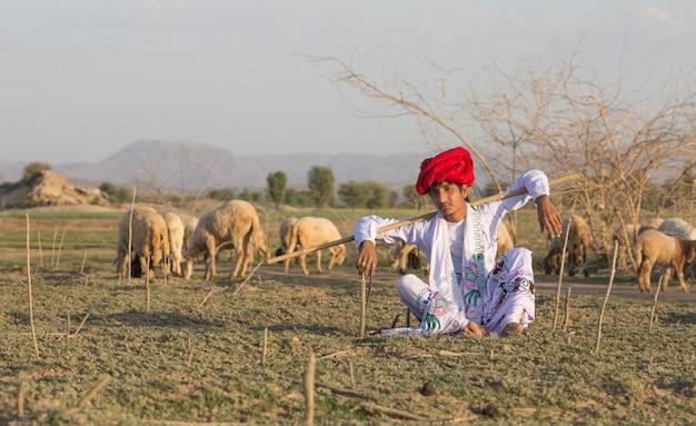 Rajasthani tribale man draagt traditionele kleurrijke casual en hoedende kudde schapen in het veld