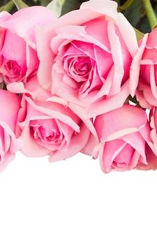 Rand van verse roze rozen close-up geïsoleerd op een witte achtergrond