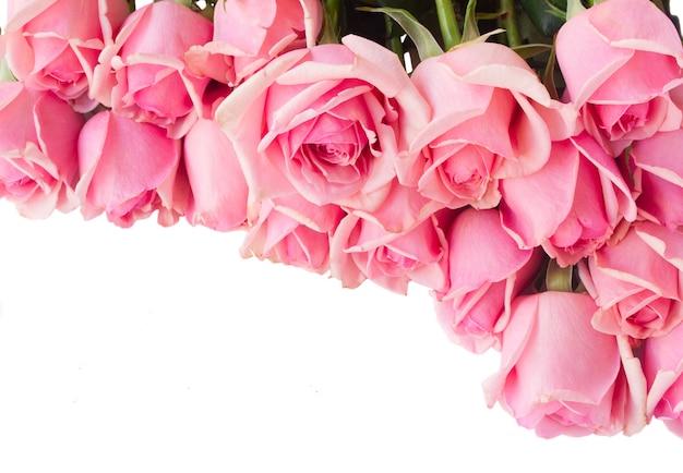 Rand van verse roze rozen geïsoleerd op een witte achtergrond