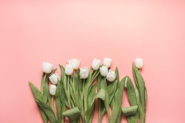 Rand van witte tulp op millennial pink. bovenaanzicht met kopie ruimte.