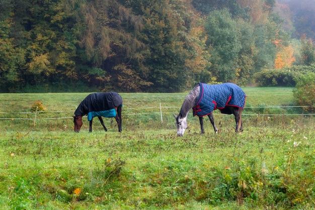 Raspaarden met jassen die gras eten, omringd door herfstbomen en natuur
