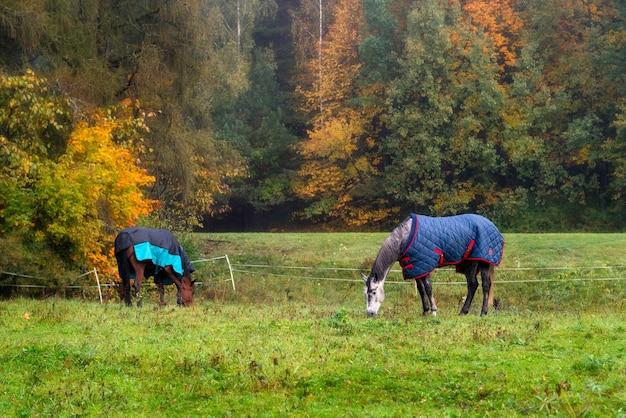 Raspaarden met jassen die gras eten, omringd door herfstbomen.