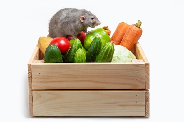 Rat op een doos met groenten. witte geïsoleerde achtergrond. symbool jaar van de rat. leuk huisdier.