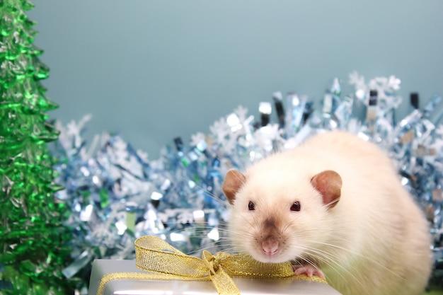 Rat tussen het klatergoud in de buurt van het geschenk. het concept van het nieuwe jaar 2020.