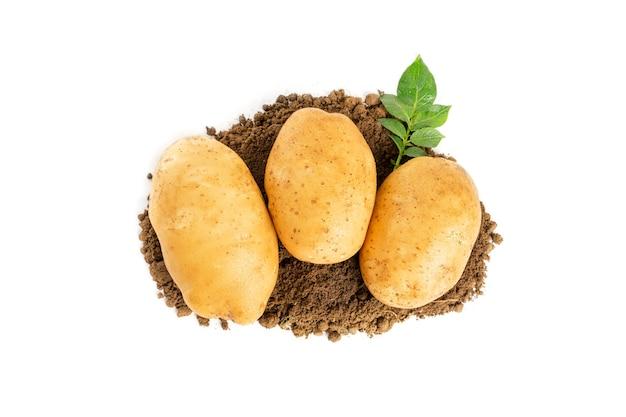 Rauwe aardappelen geïsoleerd op witte achtergrond