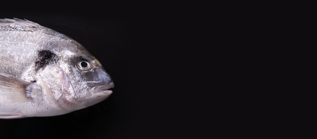 Rauwe dorado vis op zwarte achtergrond, panoramisch model