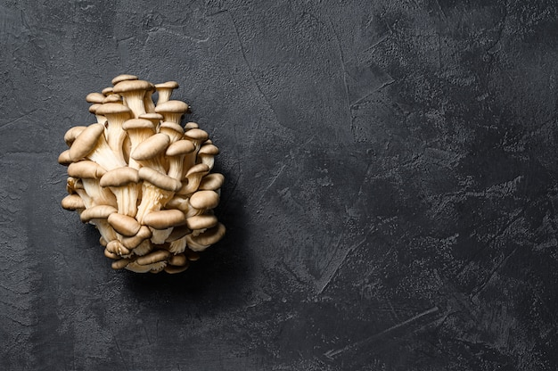 Rauwe oesterzwammen. biologisch voedsel. zwarte achtergrond. bovenaanzicht. ruimte voor tekst