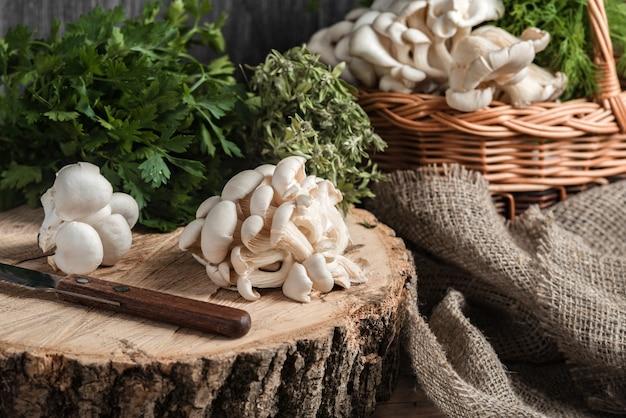 Rauwe oesterzwammen met mes op de dwarsdoorsnede van de grote oude boom
