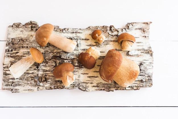 Rauwe witte champignons op de achtergrond van berkenschors. herfst botanische compositie..