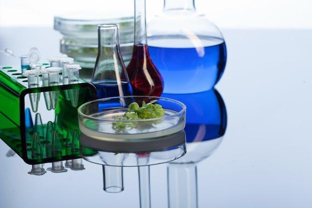 Reageerbuis retotr en groene spruit in laboratorium