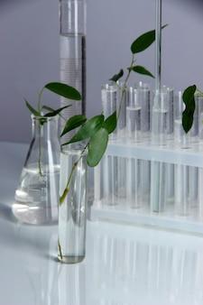 Reageerbuisjes met plant op grijs oppervlak
