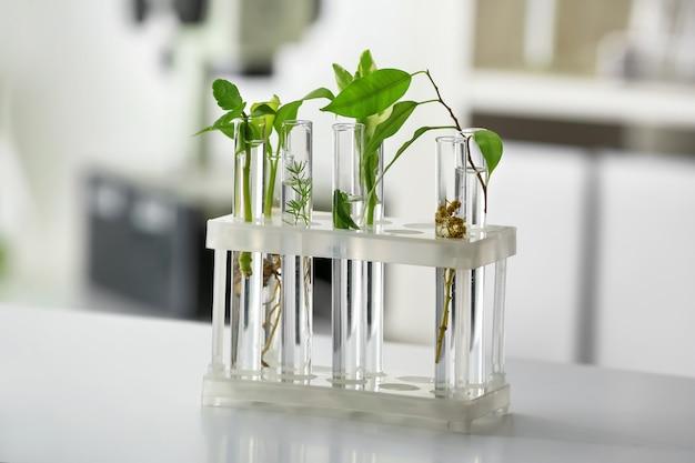 Reageerbuisjes met planten op tafel tegen wazig