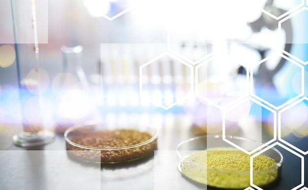 Reageerbuisjes met zaden van selectieplanten. onderzoek naar landbouwgranen en -zaden in het laboratorium