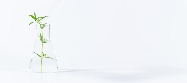 Reageerbuizen en ander laboratoriumglaswerk met verschillende planten op witte achtergrond