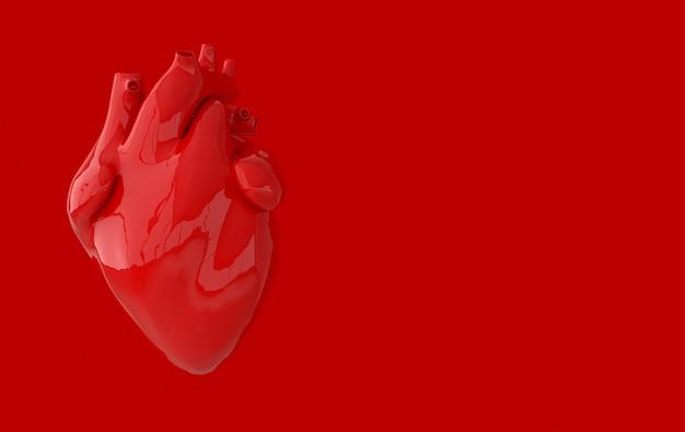Realistisch menselijk hartorgel met slagaders en aorta 3d-rendering