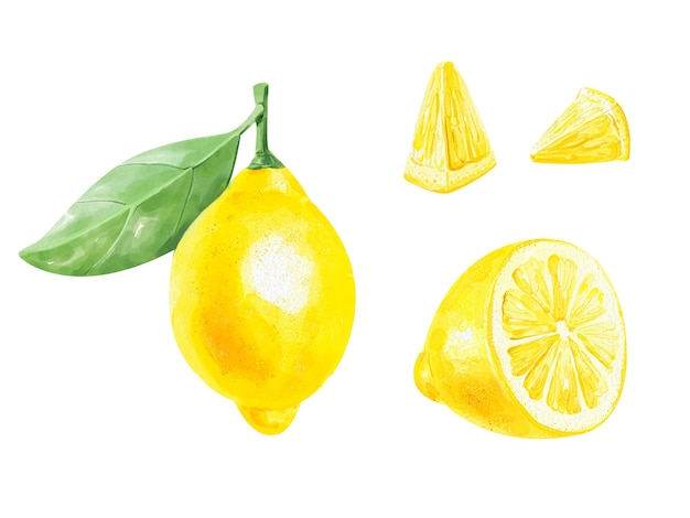Realistische aquarel set van een citroen met blad en schijfjes citroen op witte achtergrond