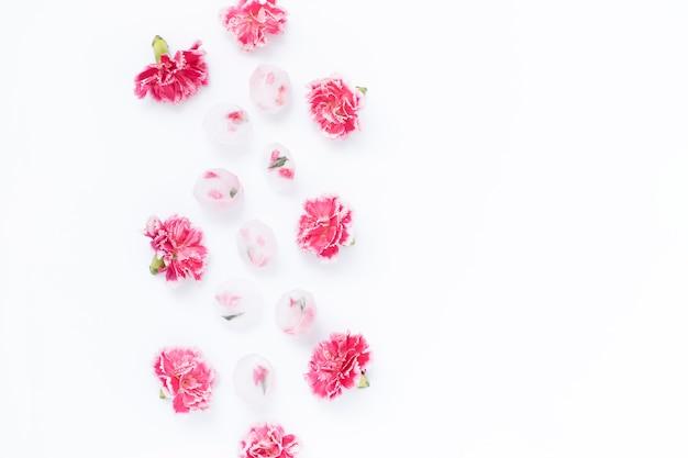 Recept van jeugd, gezichtsverzorging, ijsblokjes met kruiden en anjer roze bloemen op wit wordt geïsoleerd