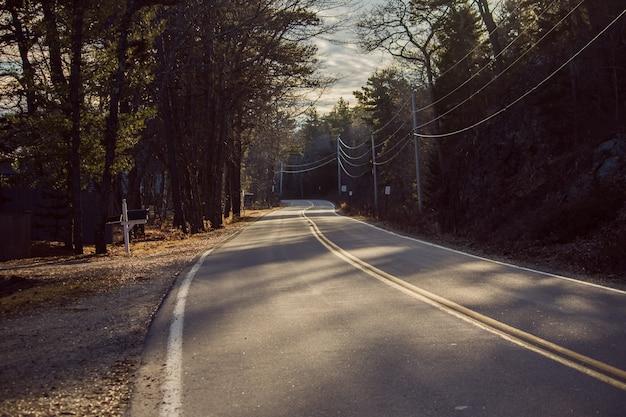 Rechte snelwegweg die door een bos op een zonnige dag gaat