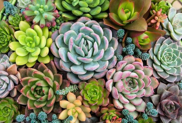 Rechthoekige rangschikking van vetplanten; cactus succulenten in een planter