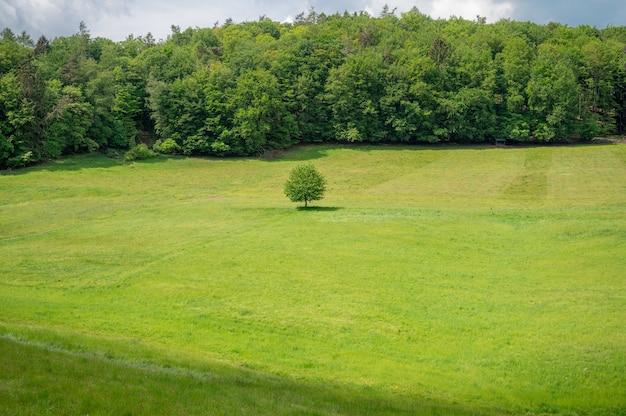 Recreatiegebied odenwald in het hart van europa