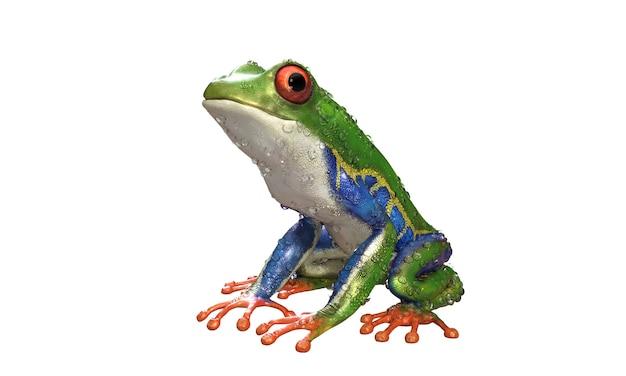 Red-eyed amazon tree frog een tropisch regenwoud dier met uitknippad