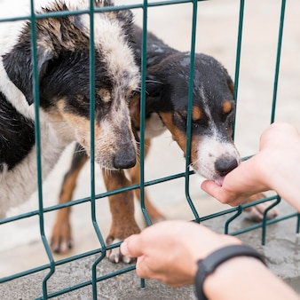 Reddingshonden krijgen traktaties achter een hek bij adoptieopvang