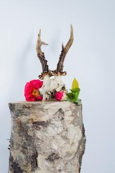 Reeën schedel met camelia's voor decoratie.