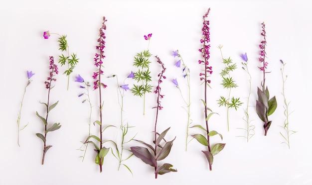 Reeks wilde orchideebloemen en hortensia, geraniumbos op wit. epipactis atrorubens, donkerrode helleborine, koninklijke helleborine. plantkundeconcept, bovenaanzicht, plat gelegd. letland, noord-europa