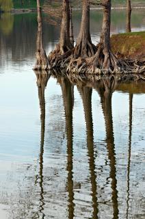Reflectie, bspo06, water