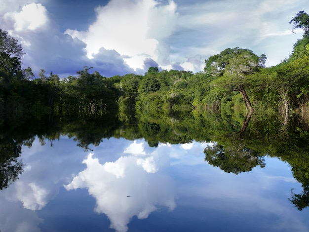 Reflecties van de amazone, brazilië