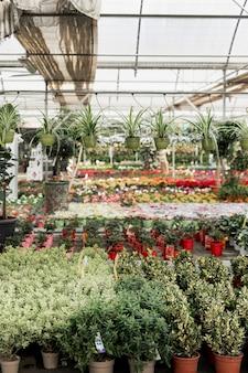 Regeling met markt vol bloemen