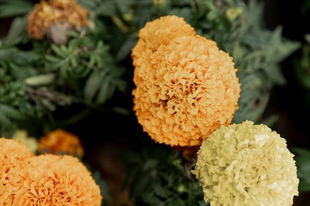 Regeling met mooie gele bloemen