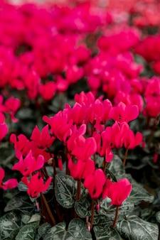 Regeling met mooie rode bloemen