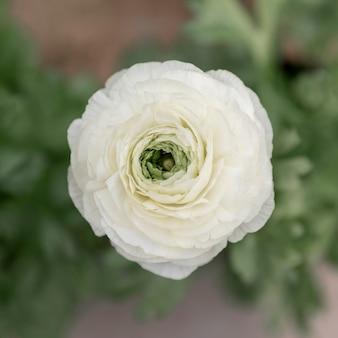 Regeling met mooie witte bloem
