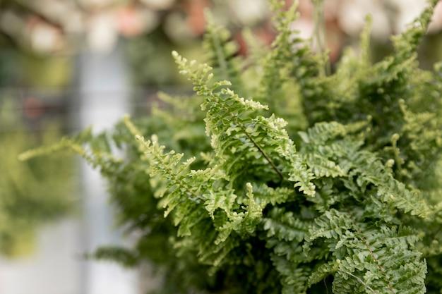 Regeling met prachtige groene plant