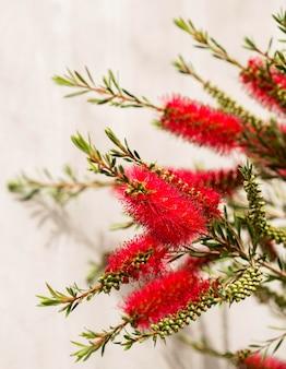 Regeling met prachtige rode bloemen