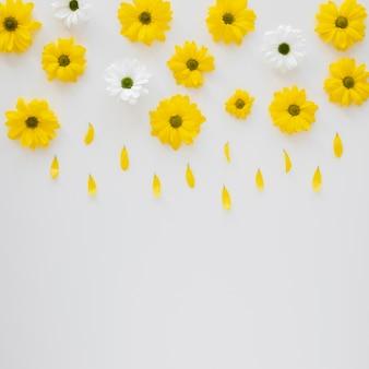 Regeling van prachtige bloeiende bloemen
