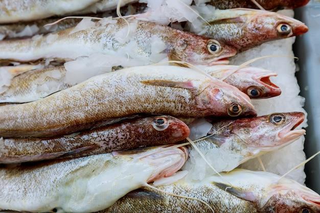 Regeling van verse vis en zeevruchten