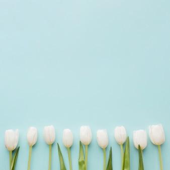 Regeling van witte tulpenbloemen op blauwe exemplaar ruimteachtergrond