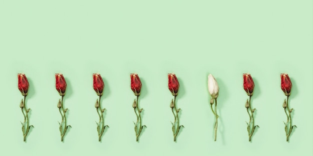 Regelmatig creatief patroon van droge witte bloemen eustoma