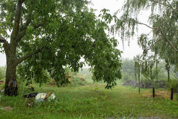 Regen op de binnenplaats van een dorpshuis. groene natuur