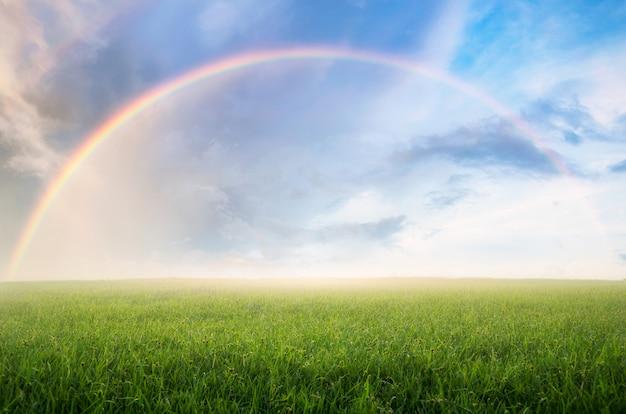 Regenboog met weide.
